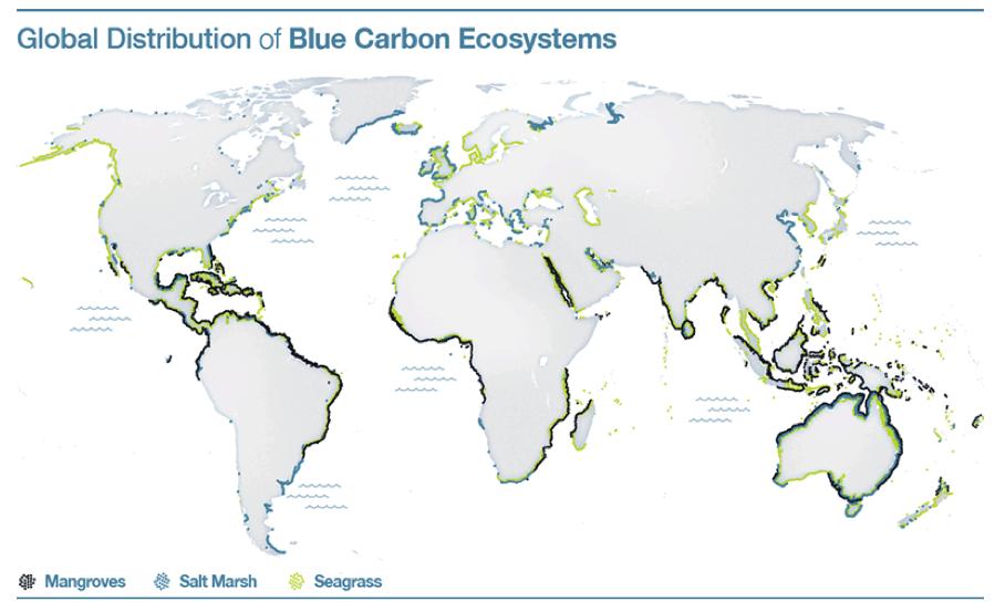 El potencial de sumidero del carbono azul